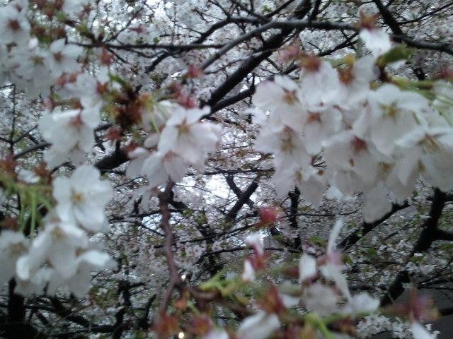 2011-04-11 18.02.35.jpg