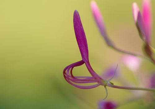 園内の花8