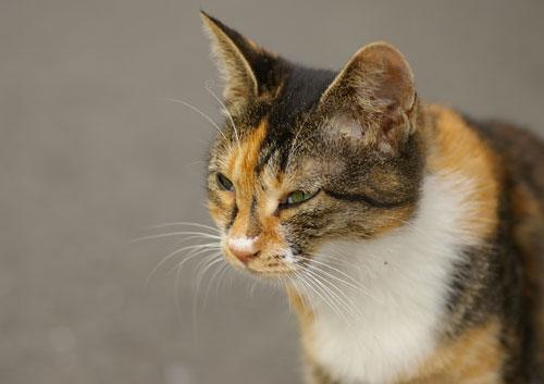 081004猫1
