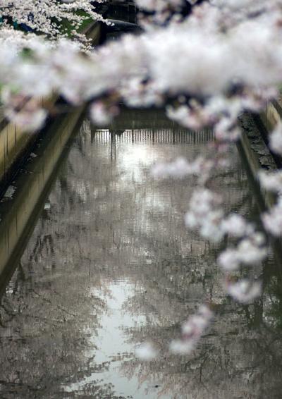 10403桜12