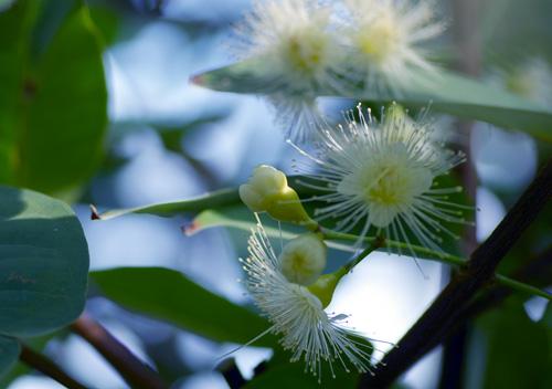 10417温室の花4