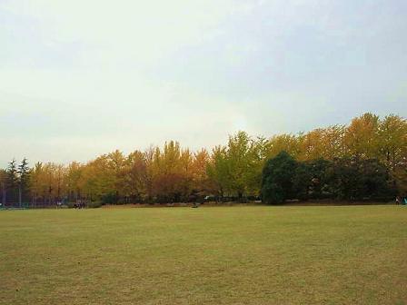 昭和記念公園紅葉1