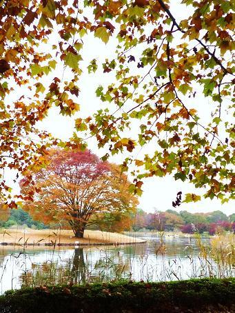 昭和記念公園紅葉2