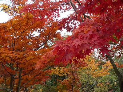 昭和記念公園紅葉7