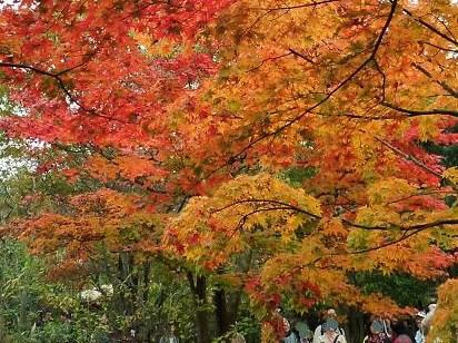 昭和記念公園紅葉9