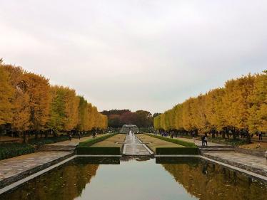 昭和記念公園紅葉8