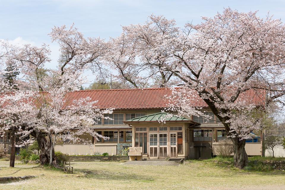 下里分校と桜01