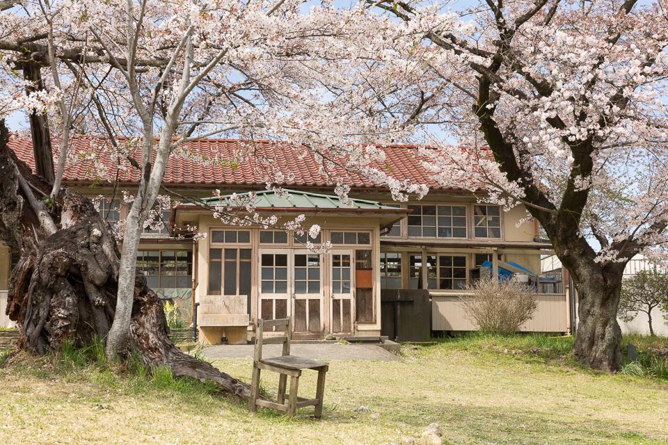 下里分校と桜02