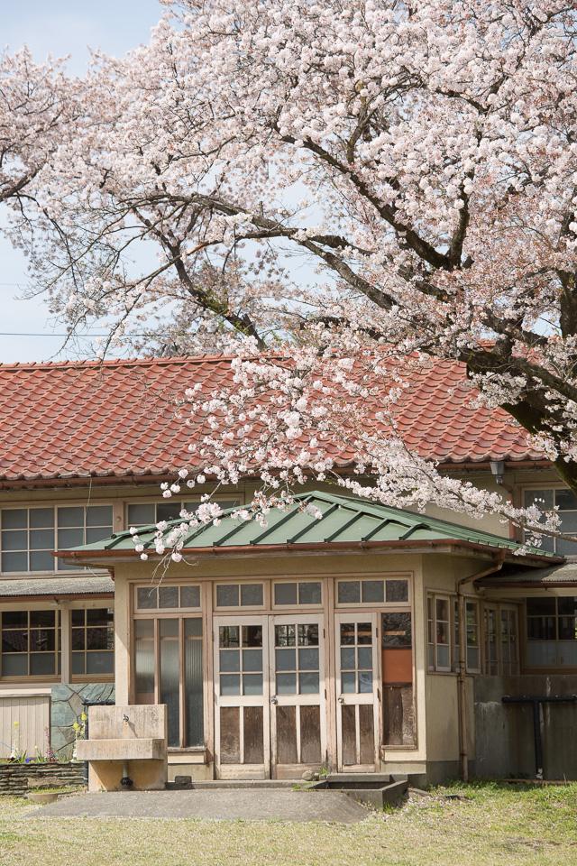 下里分校と桜03
