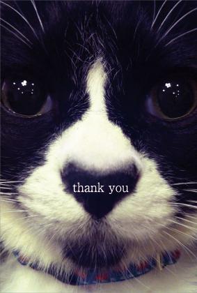 猫展ありがとうね