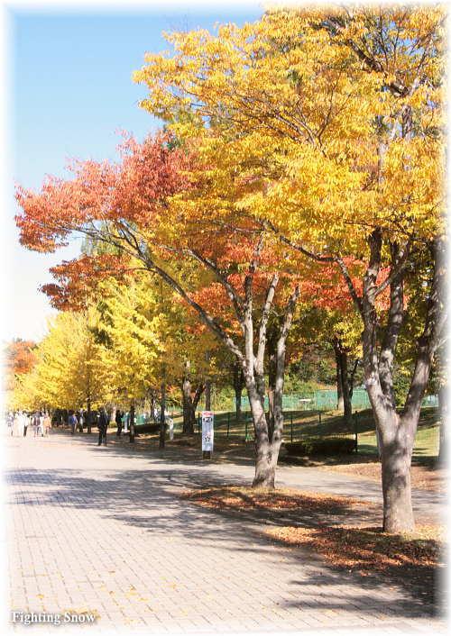 【おでかけ】銀杏並木