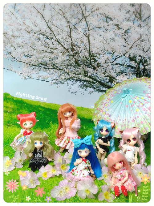 桜とドール/モモタン、パル
