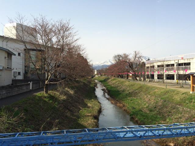 新幸橋からの桜・4月1日