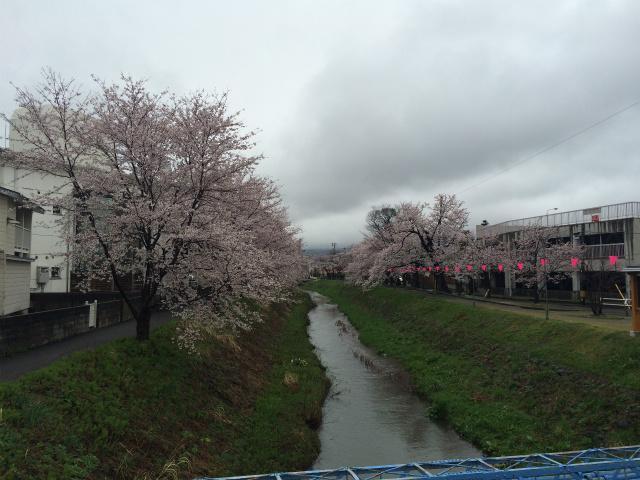新幸橋からの桜・4月4日