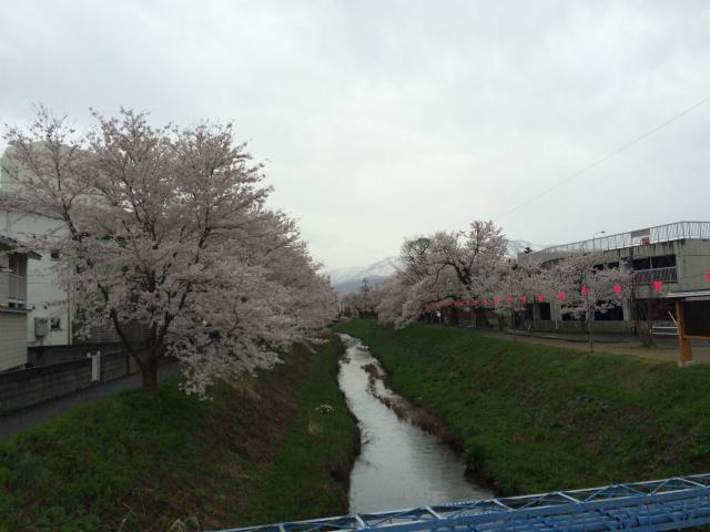 新幸橋からの桜・4月7日