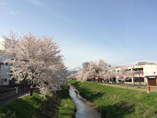 新幸橋からの桜・4月9日