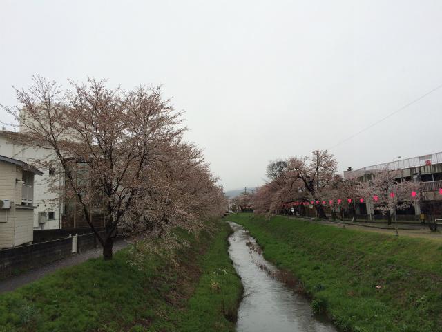 新幸橋からの桜・4月11日