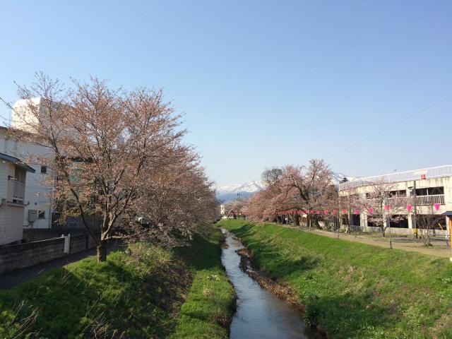 新幸橋からの桜・4月12日