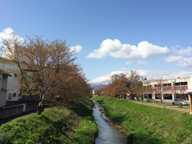 新幸橋からの桜・4月15日