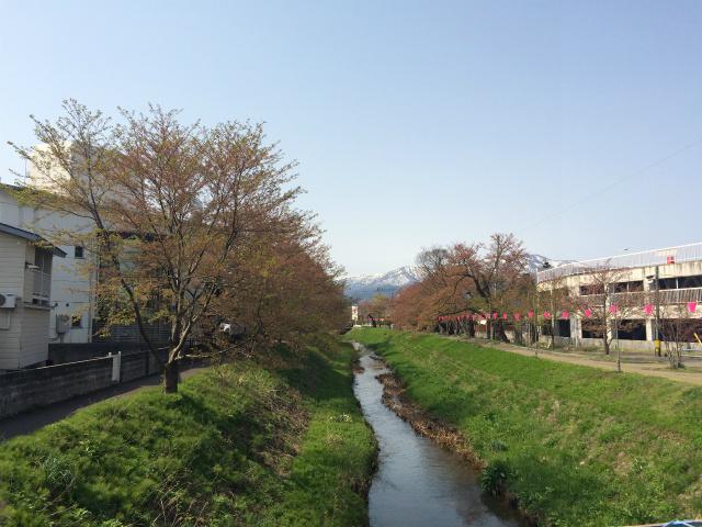 新幸橋からの桜・4月16日