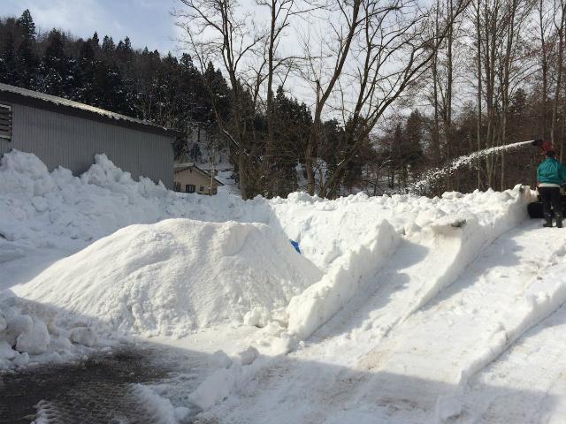 雪中貯蔵作業 追い込み!