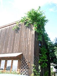 くるみの木 in 奈良
