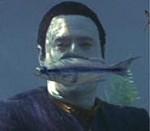 バクー星 魚
