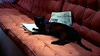 泥棒成金 黒猫2