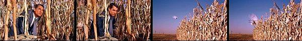 北北西に進路を取れ トウモロコシ畑