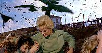 鳥 ヒッチコック 小学校