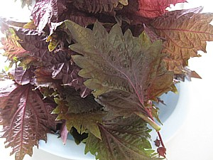 赤紫蘇ジュース2