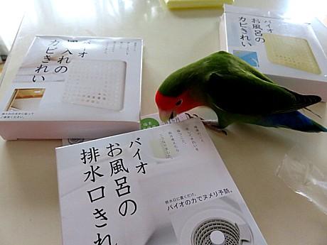 yukio0813 015.JPG