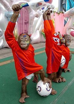 2006年ワールドカップ