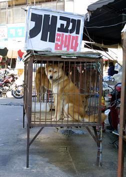 韓国 狗肉 犬鍋