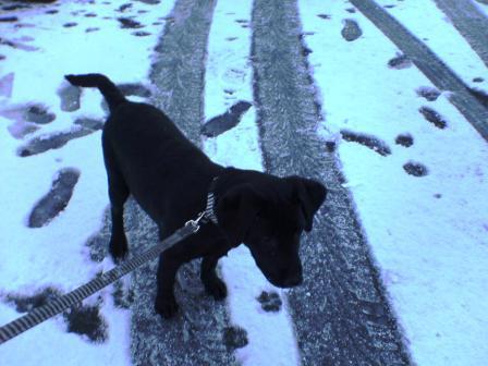 初雪を体験するラブちゃん