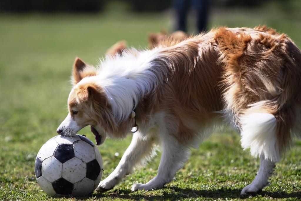サッカーをするソルちゃん