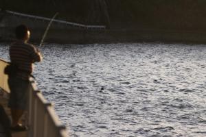 マリオの釣り