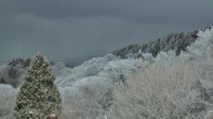 樹氷が綺麗