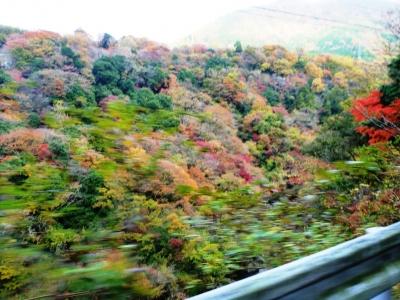 芦ノ湖へ行く道中