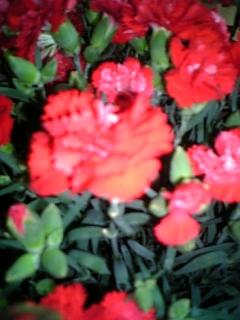 20070512_313312.jpg