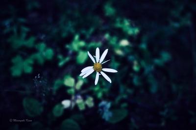 完全な不完全な花/蓼科高原