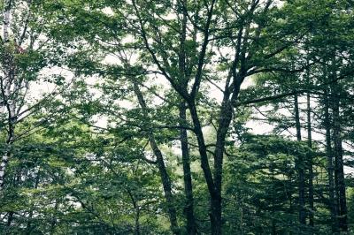 不安定ながら概ね曇り時々晴れの蓼科高原