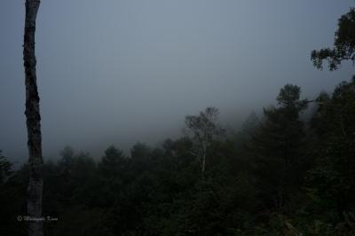 霧の帰り道|蓼科高原