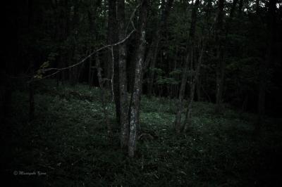 仄暗い森もまた心癒やす蓼科高原
