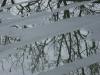 雨に濡れる木の影