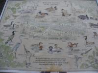 水鳥マップ大