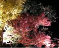 鎌倉 長谷寺 紅葉のライトアップ