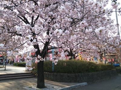 春ですね〜(^−^)
