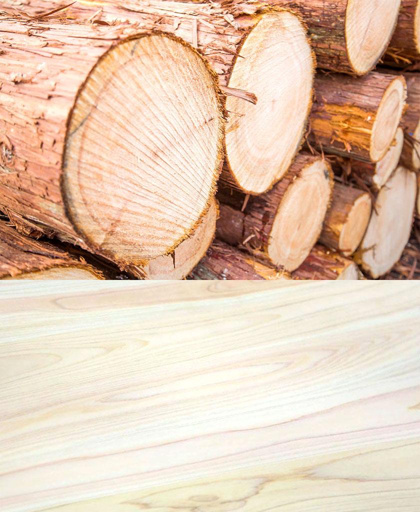 兵庫檜の原木と木目