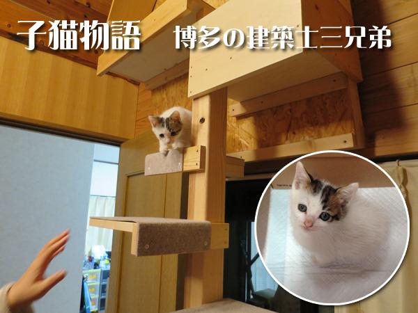 義人ブログ_猫0000.png